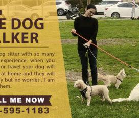 Fari the Dog Walker