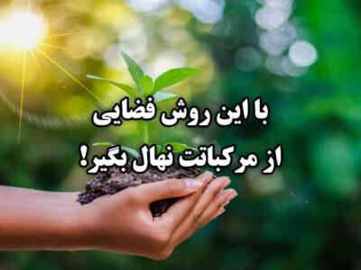 پرورش گیاه